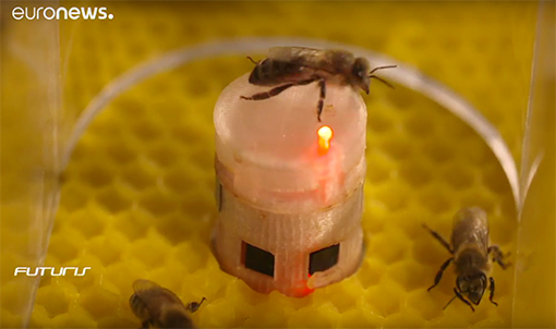 interazione sociale robot api Graf AssisiBF