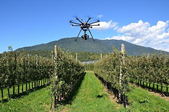 Metacortex_drone Eye Scab mele Trentino