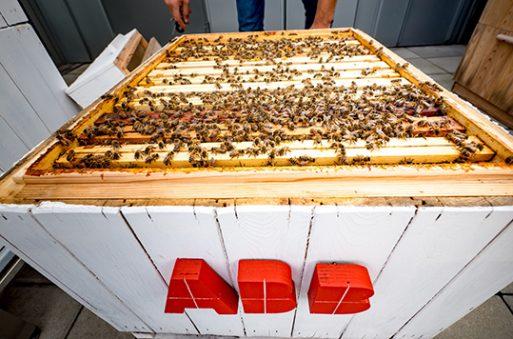 api centro ricerca algoritmi ABB